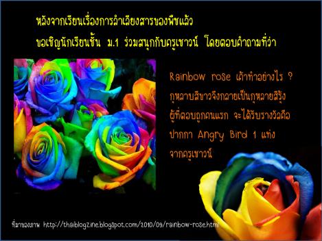 rainbow rose ร่วมสนุกกับครูเชาวน์